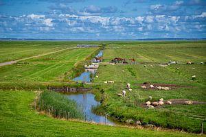 Zicht op Ameland van Manon van Althuis