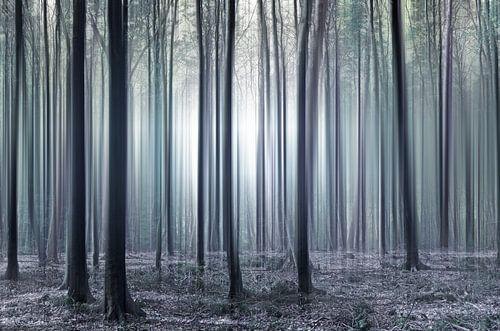 Zauberwald  von Violetta Honkisz