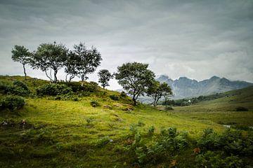 Bäume in Schottland von Freddy Hoevers