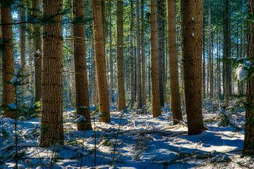 Säulen im Schnee von Joran Quinten