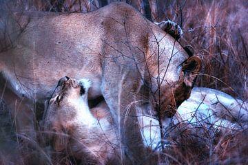 Knuffelende Leeuwinnen van Aad Clemens