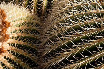 Close-up cactus von Ronald Bruijniks