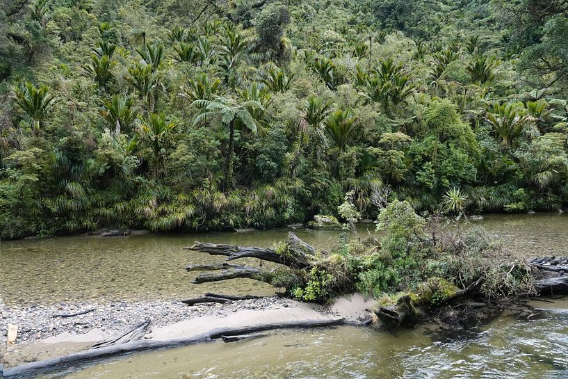 Regenwoud bij de Pororai Rivier  bij Punakaiki in Nieuw Zeeland van Aagje de Jong