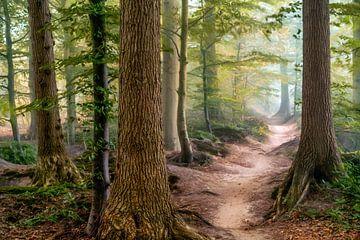 Path of Merdien van Lars van de Goor