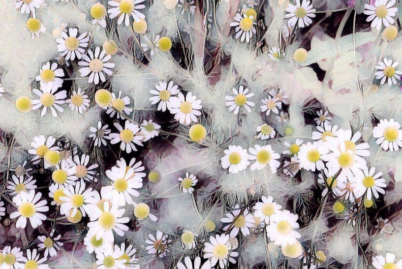 Blühende Kamille von Patricia Piotrak