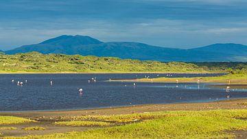 Flamingos im Ndutu-See von Anja Brouwer Fotografie