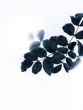 Groene bladeren van Maria Almyra