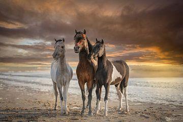 Paarden (3 hengsten) met ondergaande zon op het strand van ingrid schot