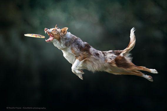 Vliegende hond! van Nuelle Flipse