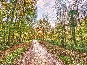 Sunset Lane von Frank Maurits