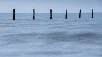 Meeuwen op palen van Sam Mannaerts Natuurfotografie