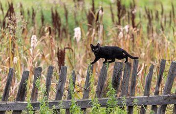 Schwarze Katze im Gleichgewicht von jaap van der kooij