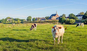 Kühe auf den Überschwemmungsflächen des niederländischen Flusses De Waal von Ruud Morijn