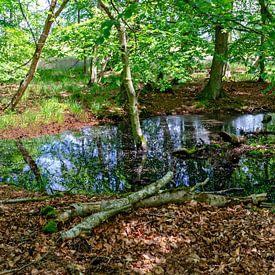 Étang forestier près de Zingst sur Leopold Brix