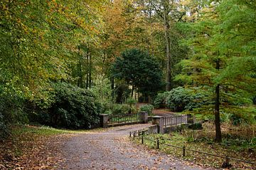 Herfst bosweg van Frank de Ridder