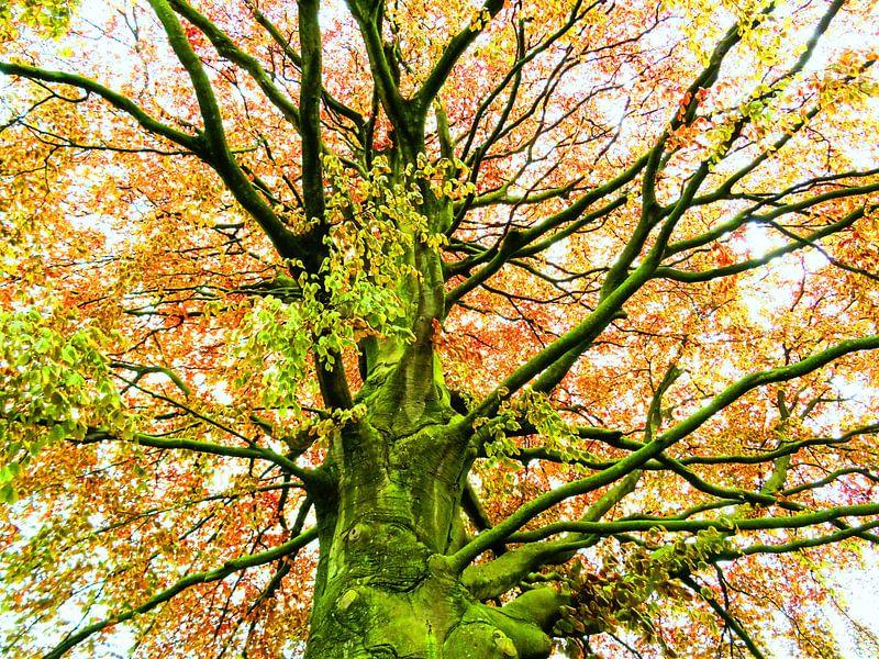 Tree Magic 168