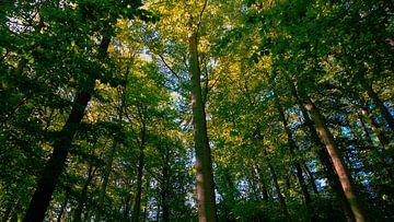 Sonnenschein Wald von Jenny Heß