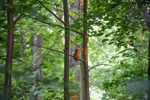 Junger Waldkauz van