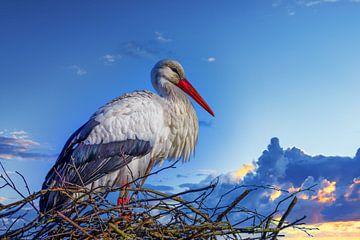Ooievaar op zijn nest van Marcel Kieffer