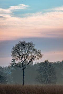 Boom tijdens het blauwe uur van Jeroen Brasz