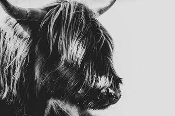 Portret Schotse Hooglander, Highland cow van Jeffrey Hensen