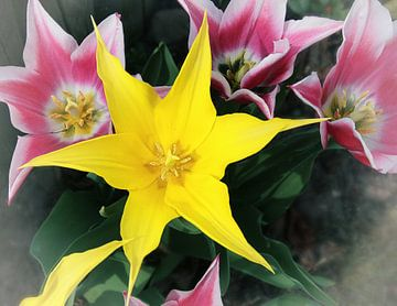 Yellow-star_SvD van Stefanie van Dijk