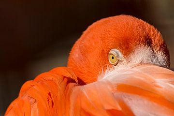 Oog in oog met een flamingo van Caroline Wirtz