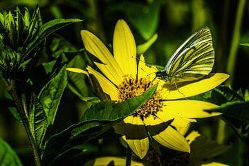 Bloem met vlinder van Cor Pot