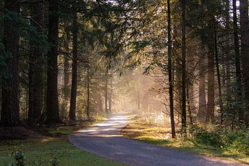 lumière du matin dans la forêt sur Tania Perneel