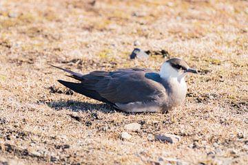 Jager (Vogel) van Merijn Loch