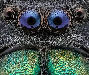 springspin / Jumping Spider van marco jongsma