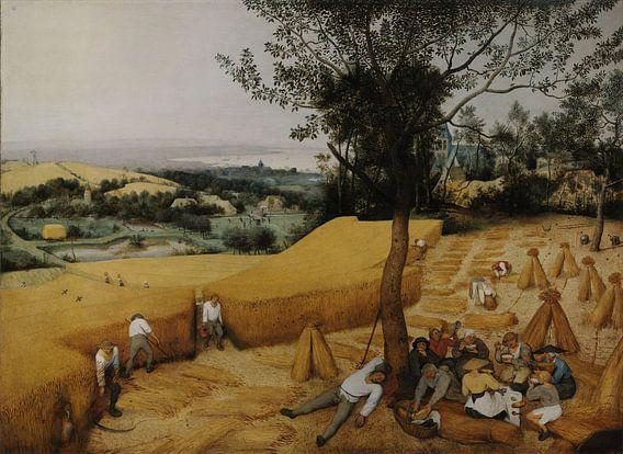 De Oogsters van Pieter Brueghel de Oude van Rebel Ontwerp