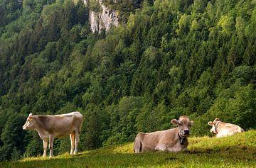 Koeien in alpenweide van John Stuij