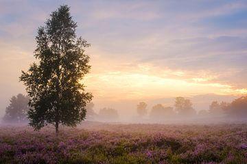 Nebel bei Sonnenuntergang von Johan Vanbockryck