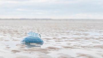 Aangespoeld op het strand van Bas Ronteltap