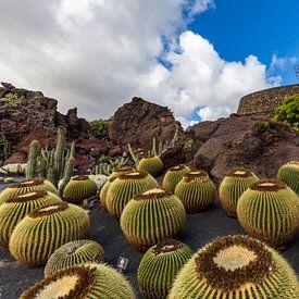 Jardín de Cactus van Easycopters