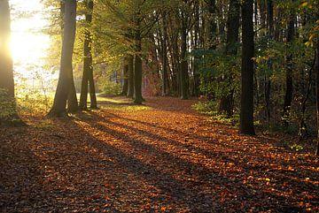 Zonnestralen in de herfst van Tom Van Dyck