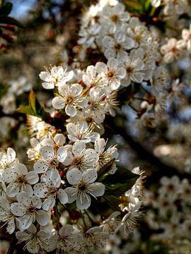 Weiße Blüte von Renate Mager
