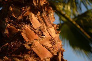 Avond zon kleurt de Palmboom van