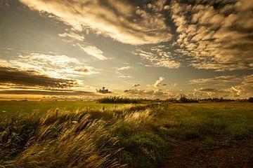 Sonnenuntergang im Den Haager Beemdenbos von Cees van Gastel