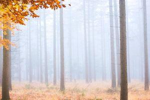 Bomen in de mist van Francis Dost
