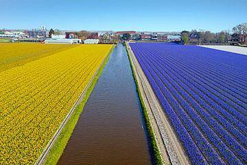 Luchtfoto van bloeiende tulpen op hete platteland in Nederland van Nisangha Masselink