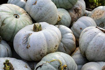 hoopje grijze pompoenen op een boerenmarkt, decoratieve herfstgroente voor halloween en thanksgiving van Maren Winter