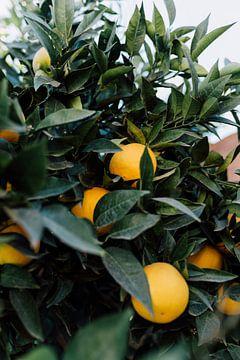 Tropische Orangen   Marokkanische Reisefotografie   Kunstdruck von Yaira Bernabela