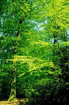 Bomen in het bos van Sharon Jansen