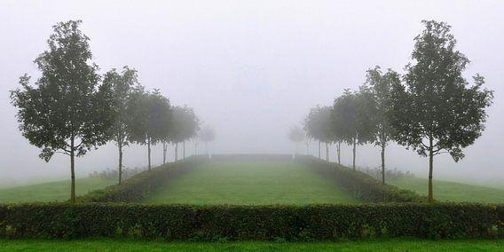 Twee rijen bomen