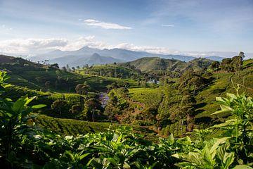 Theeplantage in Cukul, Java van Ellis Peeters