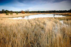 Winterven op de Sonse Heide, Nederland