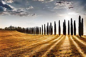 Zypressenweg mit Landhaus / Bauernhof in der Toskana / Italien von Fine Art Fotografie