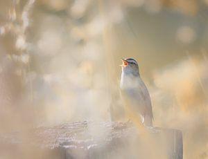 Vogel zingend op paal van natascha verbij